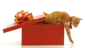 Jogo engraçado pequeno dos gatinhos vídeos de arquivo
