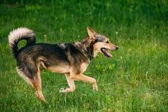 Jogo equipado com pernas do cão do tamanho médio três misturados da raça exterior no verão imagem de stock royalty free