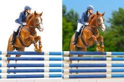 Jogo - esporte equestre: mostre o salto Imagens de Stock Royalty Free