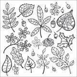 jogo Folhas de outono decorativas, bagas, bolotas ilustração royalty free