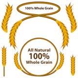 Jogo inteiro do trigo da grão Foto de Stock