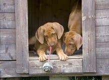 Jogo pequeno adorável dos cachorrinhos foto de stock royalty free