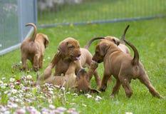 Jogo pequeno adorável dos cachorrinhos imagem de stock royalty free