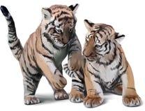 Jogo pequeno de dois tigres Imagem de Stock Royalty Free