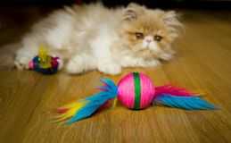 Jogo persa do gatinho imagem de stock