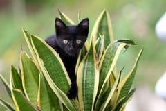 Jogo preto do gatinho no jardim fotos de stock royalty free