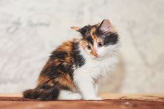 Jogo tricolor bonito do gatinho foto de stock royalty free