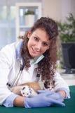 Jogo veterinário novo com o quatro pequenos bonitos um gatinho Imagens de Stock
