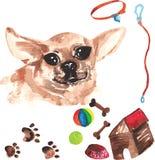 Jogo veterinário que compreende a chihuahua e os acessórios para cães, wa Imagens de Stock Royalty Free
