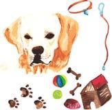 Jogo veterinário que compreende labrador retriever e acessórios Fotografia de Stock Royalty Free
