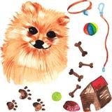 Jogo veterinário que compreende o cão e os acessórios de Pomeranian para o cão Fotografia de Stock