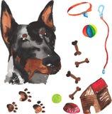 Jogo veterinário que compreende o doberman e os acessórios para cães, wat Foto de Stock