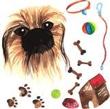 Jogo veterinário que compreende o pequinês e os acessórios para cães, wa Fotos de Stock