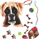 Jogo veterinário que compreende o pugilista e os acessórios para cães, waterc Imagem de Stock Royalty Free