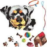 Jogo veterinário que compreende Rottweiler e acessórios para os cães, w Imagens de Stock Royalty Free