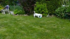 Jogos de Jack Russell Terrier video estoque