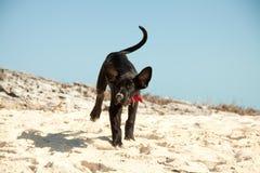 Jogos do cão na água Foto de Stock Royalty Free