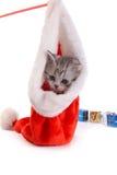 Jogos do gatinho em um fundo branco Fotos de Stock Royalty Free