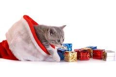 Jogos do gatinho em um fundo branco Imagens de Stock Royalty Free
