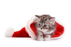 Jogos do gatinho em um fundo branco Fotos de Stock