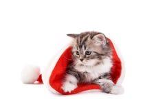 Jogos do gatinho em um fundo branco Imagem de Stock Royalty Free