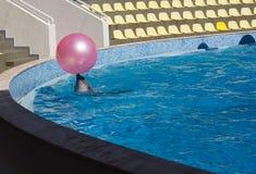 Jogos do golfinho com uma bola Imagens de Stock Royalty Free