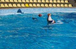Jogos do golfinho com uma bola Fotografia de Stock