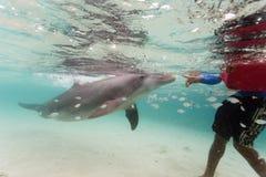 Jogos do golfinho de Bottlenose com o nadador nas Caraíbas Foto de Stock Royalty Free