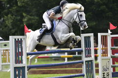 Jogos 2015 equestres de Taiwan (saltar) fotografia de stock royalty free