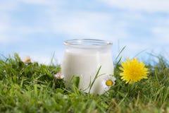 Jogurt na trawie z kwiatami obraz stock