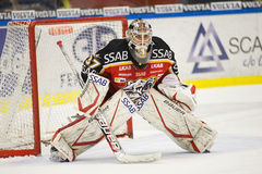 Johan Gustafsson - Ice Hockey Goalie royalty free stock photos