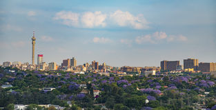 Johannesburg CBD linii horyzontu Jacarandas kwiat Obraz Stock