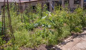 Inner-city gardening in Johannesburg, South Africa stock images