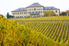 Johannisberg Castle. With vineyard, Hessen, Germany Stock Photography