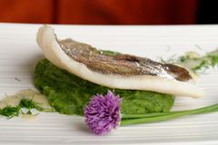 John Dory fish fillet on spinach Royalty Free Stock Photo