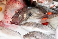 John Dory fish on market stall Stock Photography
