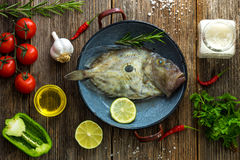 John Dory Stock Photography