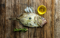 John Dory Royalty Free Stock Photos