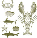 Collection of Woodcut-Style Sea Creatures. Woodcut-style illustrations of a lobster, crab, fish, sword fish, starfish, oyster, and shark Stock Photos