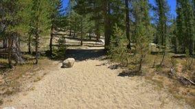 John Muir Trail que camina almacen de metraje de vídeo