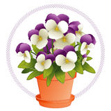 Johnny Jump Ups in a Flowerpot. Colorful purple and white Johnny Jump Up Violas (Pansies) in a clay flowerpot with saucer. EPS8 organized in groups for easy Royalty Free Stock Image