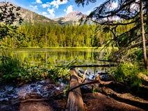 Johns jezioro od Bagiennych brzeg ofert Stunning widoki góry Fotografia Royalty Free