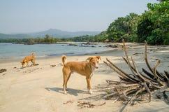 Johnson Beach noir dans le Sierra Leone, Afrique avec la mer calme, ropcks, a abandonné la plage et deux chiens Photographie stock libre de droits