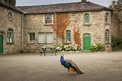 Johnstown Kasztel okręg administracyjny Wexford Irlandia Obraz Stock