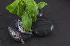 Joia como a borboleta nas pedras do preto com manjericão Fotografia de Stock Royalty Free