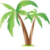 Joia dos trópicos Fotografia de Stock Royalty Free