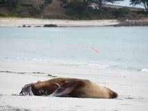 Joint blessé sur la plage sablonneuse images stock