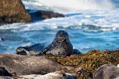 Joint détendant par l'océan Photographie stock libre de droits