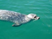 Joint de natation Photographie stock libre de droits