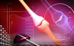Joint humain d'os de patte Image stock